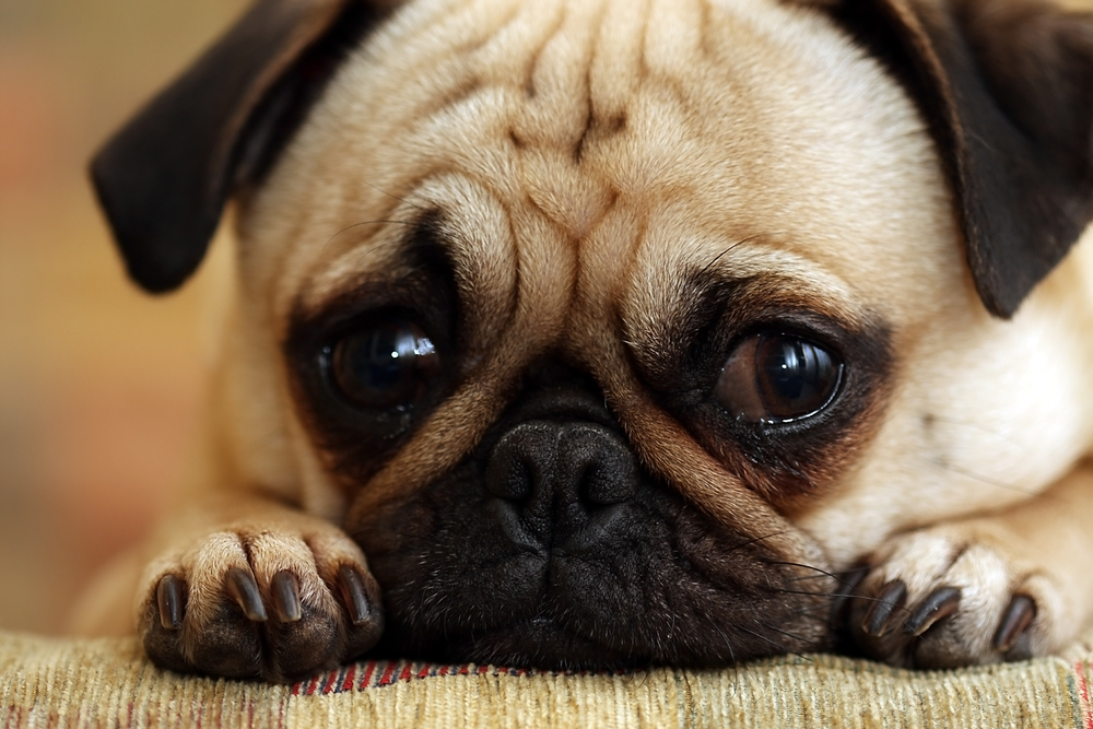 Dogs I Named – spartanholiday  Sad