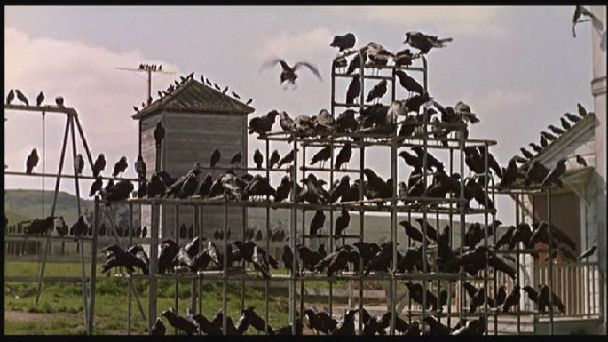 birdsatplayground